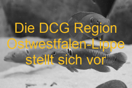 DCG Region OWL