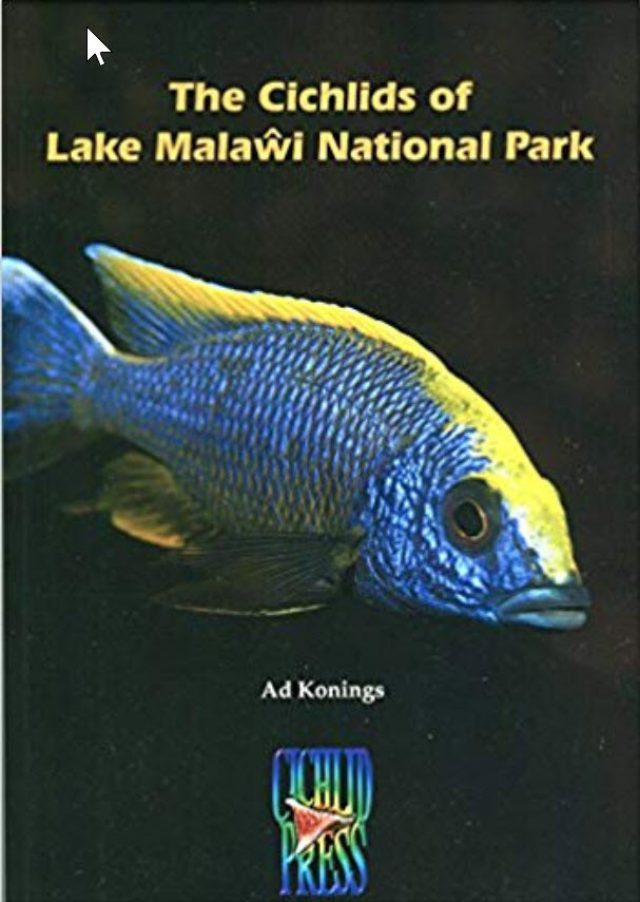 Konings, Ad – The Cichlids of Lake Malawi National Park