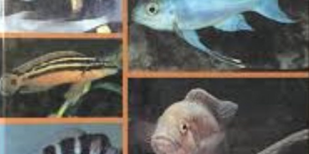 Brichard, Pierre – Das Große Buch der Tanganjika Cichliden