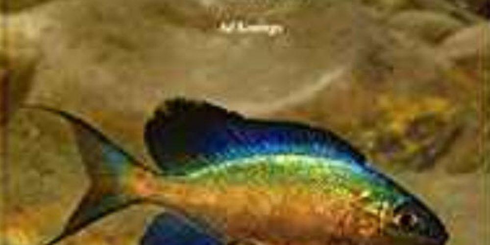 Konings, Ad – Tanganyika Cichlids in their Natural Habitat