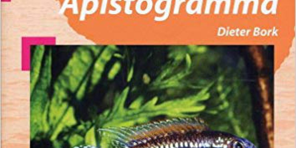 Bork, Dieter – Die neusten/the latest Apistogramma