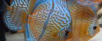 Nachlese Videokonferenz vom 14. September 2021 (Michael Schulte – Aquarienkeller) und nächste Termine