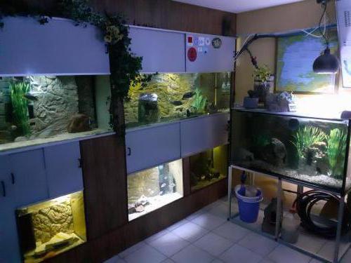Aquarienanlage Klaus Schmitz 02